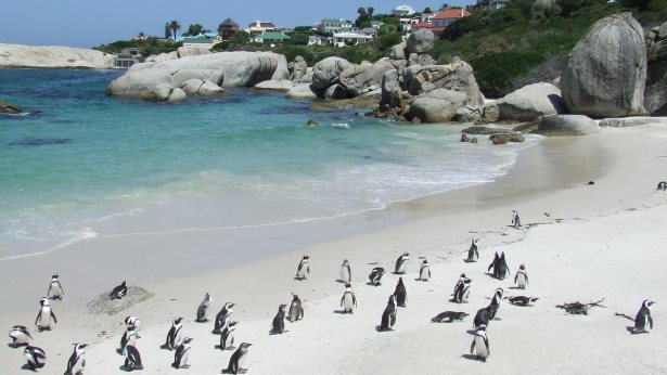 Boulders Beach near Simons Town, South Africa