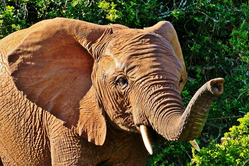 5 Unexpected Cruise Destinations, Elephant, Addo National Park, South Africa
